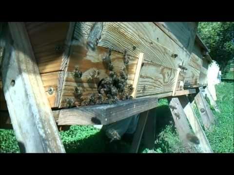 abelhas colmeia top bar