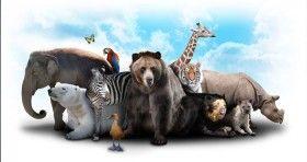 ENTREVISTA | Europa, vanguardia en bienestar animal; México lo sería en AL si aplica la Ley: HSI