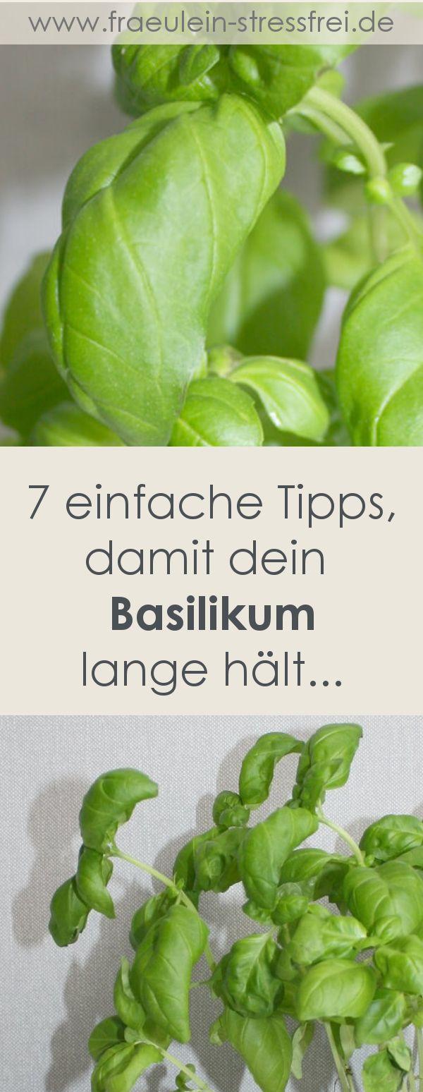 Basilikum – stressfreie Pflege im Kräutertopf