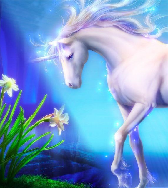 Magical unicorns #fairies #elementals #love www.facebook.com/angelsoflight44