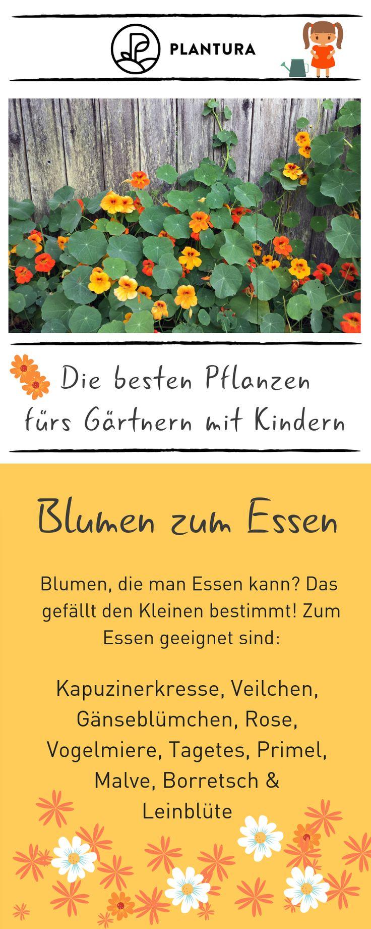 The best plants for gardening with children  – Gärtnern mit Kindern