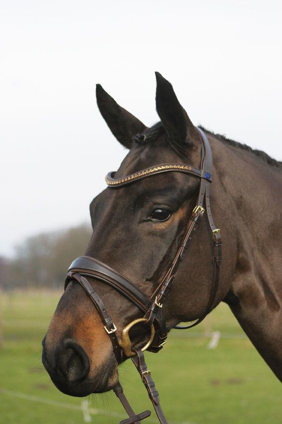 Horse Star Trense Göteborg   eBay