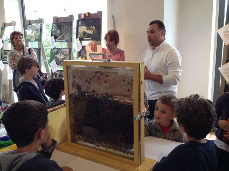 Laboratorio con l'apicultore
