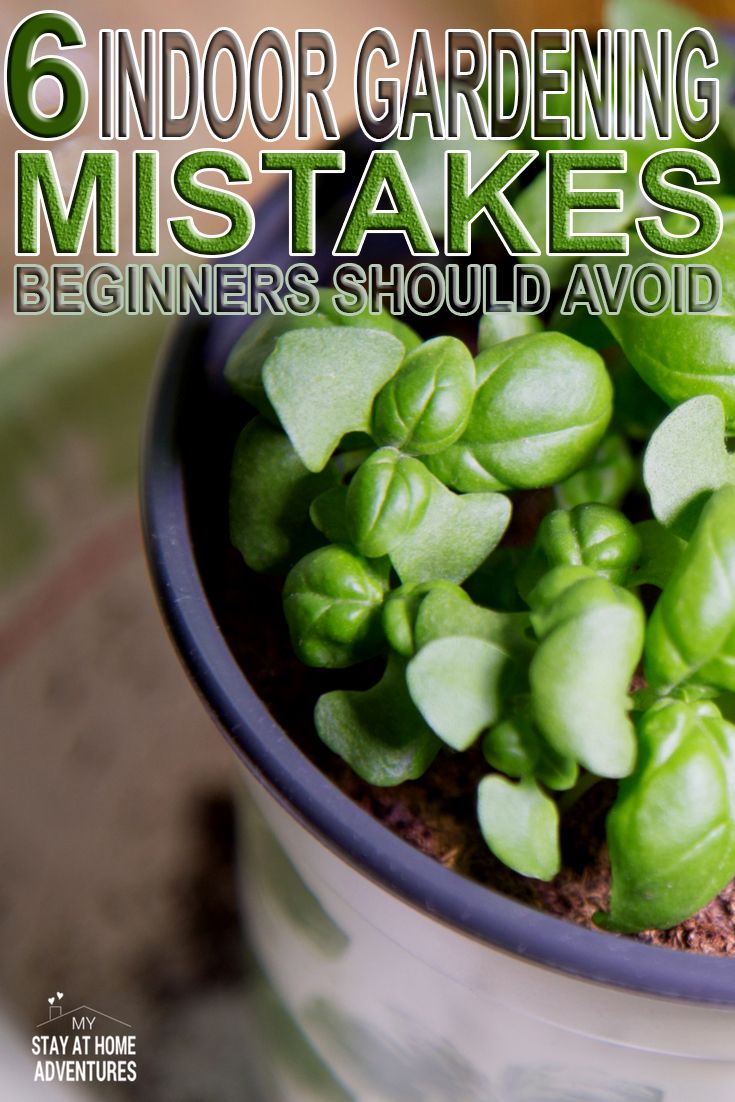 New to indoor gardening? Check out these 6 indoor gardening mistakes beginners should avoid when starting their gardens indoor.