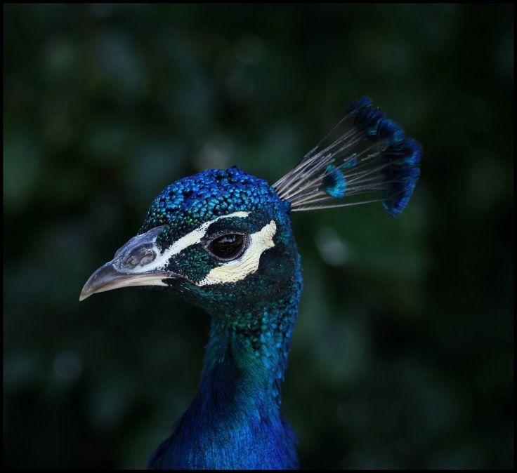 Taget i Ree Dyrepark - smuk fugl med smukke farver
