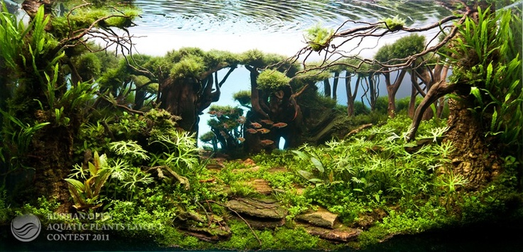 Awesome planted aquarium looks like a jungle Aquarium landscape