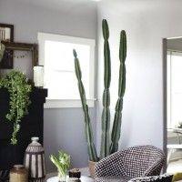 Oltre 25 fantastiche idee su Piante in soggiorno su Pinterest  Piante da app...