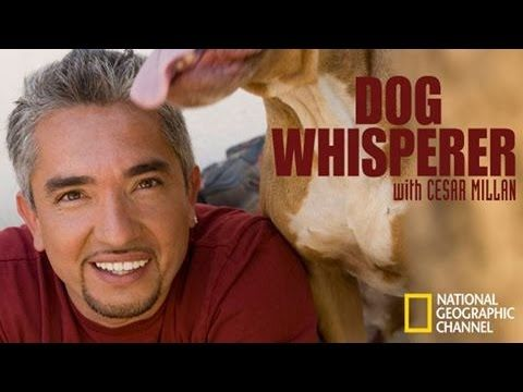 The Dog Whisperer - How to Raise the Perfect Dog