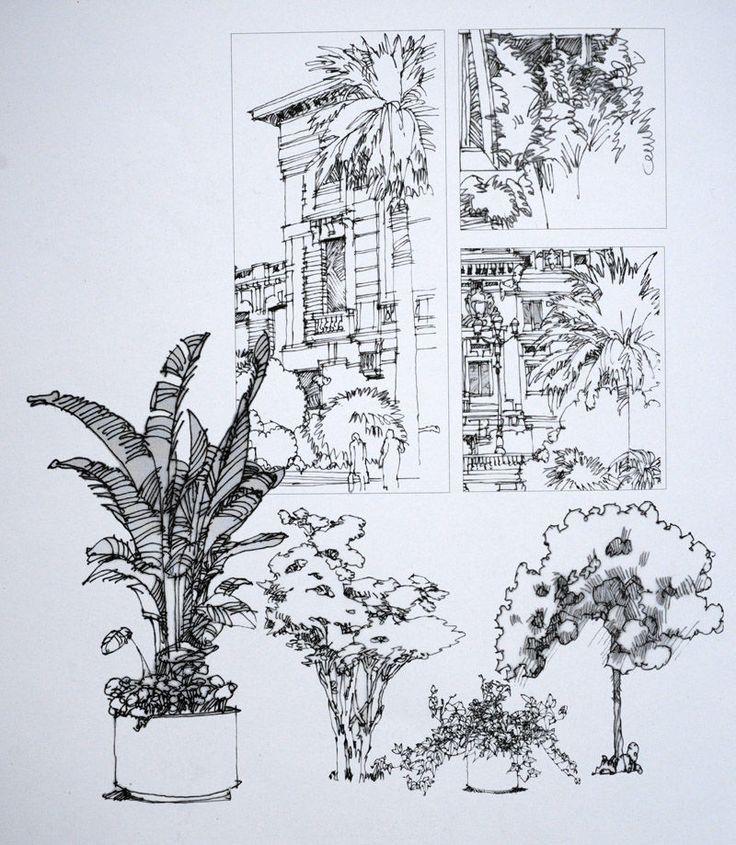 钢笔手绘巴黎建筑-------植物配景13         陈新生作品