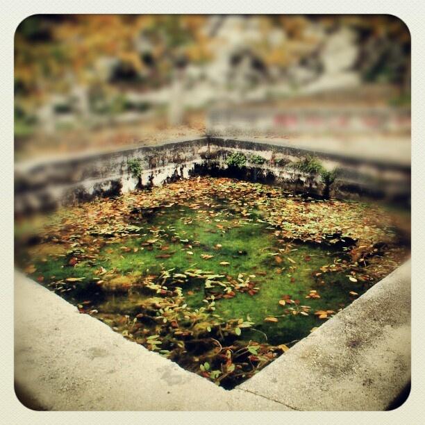 Balsa de la Font de l'Alcúdia en otoño. La Vall de Gallinera