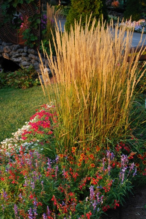 55 best karl foerster in my garden images on pinterest for Grass plants for flower beds