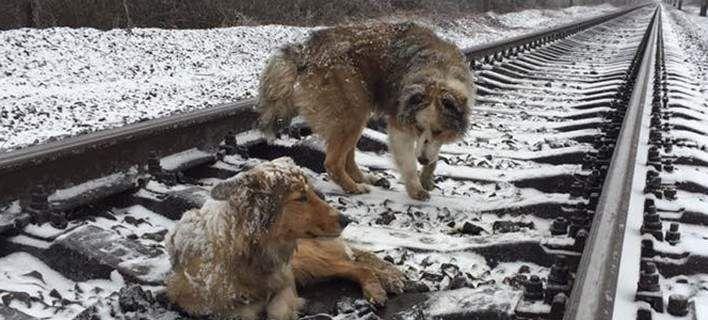 Αγρυπνος φρουρός: Αρσενικό σκυλί κρατά ζεστό το θηλυκό που έχει εγκλωβιστεί σε ράγες τρένου [εικόνα&βίντεο]