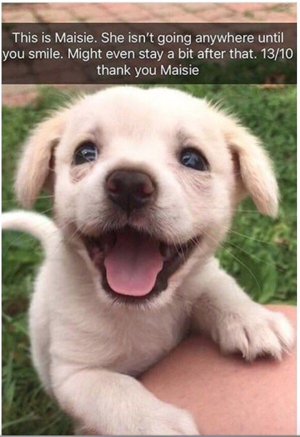 I Feel Better Now Cute Baby Animals Puppies Cute Animals