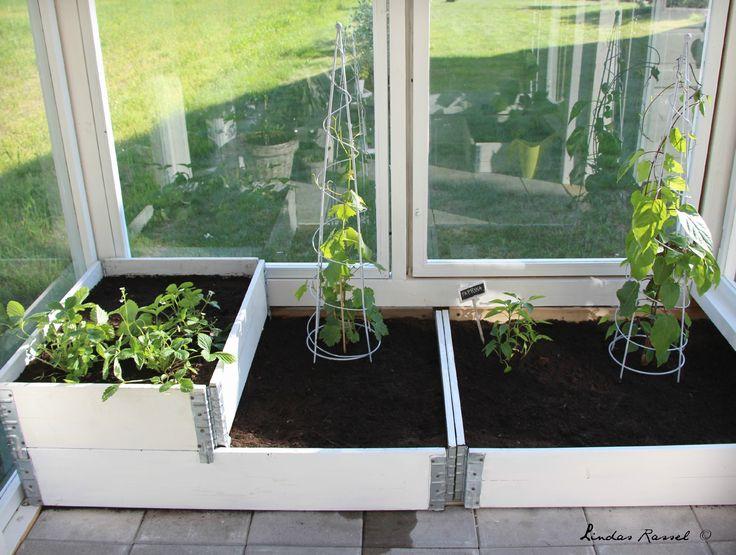 plantera i pallkragar