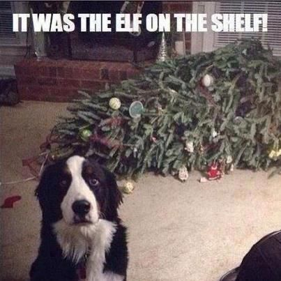 Christmas Humour | Blame the Elf On The Shelf #BeginnersGuideToChristmas