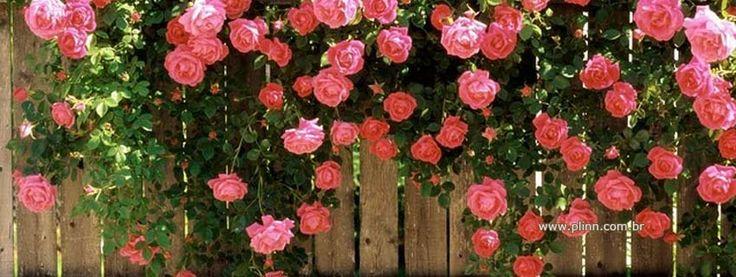 Imagenes De Flores Para Facebook | capa facebook - flores