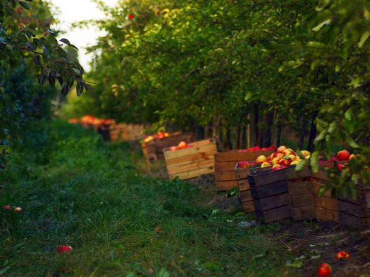 Daniela Miernik - My Neighbours Orchard