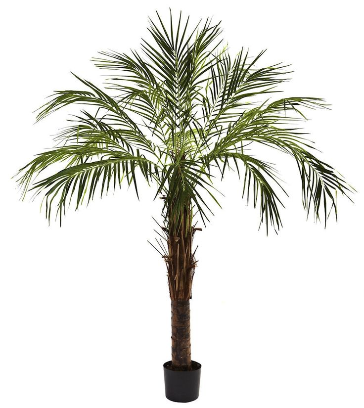 Robellini Palm Artificial Silk Tree with Planter | 72 inches