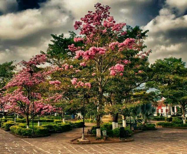 Oiba Santander Colombia Foto Luis Celis