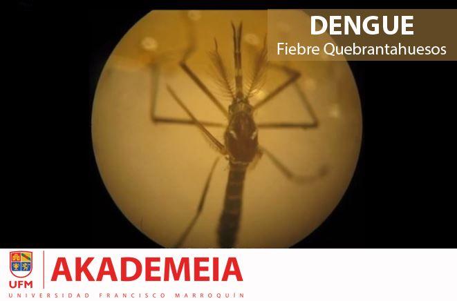 ¿Qué es el #dengue? ► http://akademeia.ufm.edu/dev/?page_id=1506&course=384&id=dq6ZeSqVsNc  #Microbiología #Picadura #Fiebre #Mosquito