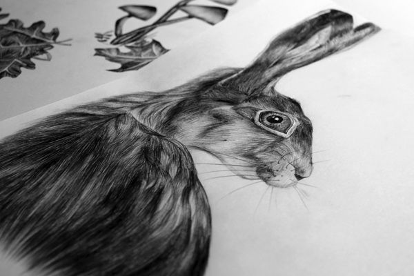 rabbit realistic, illustration, animal, forrest, #ElementEdenArtSearch