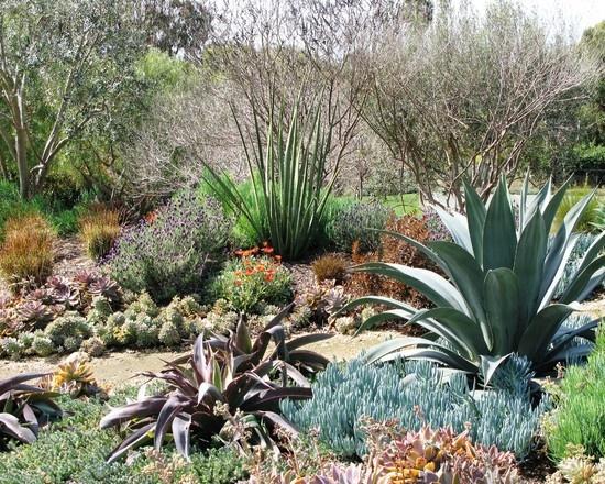 17 best Eco friendly Xeriscape Garden Design Ideas images on