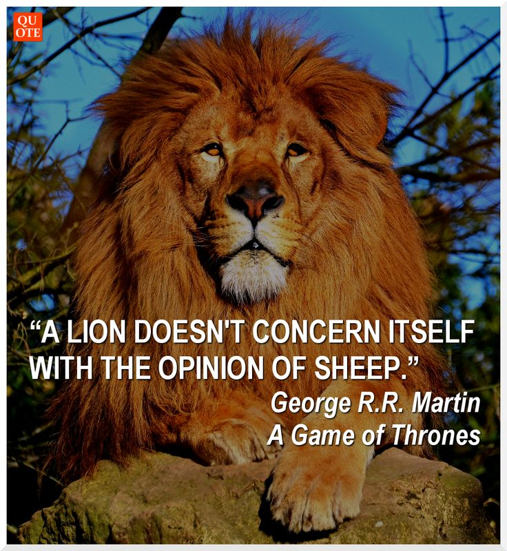 Lion Sheep Quote: 34 Best Quote Up Today Images On Pinterest