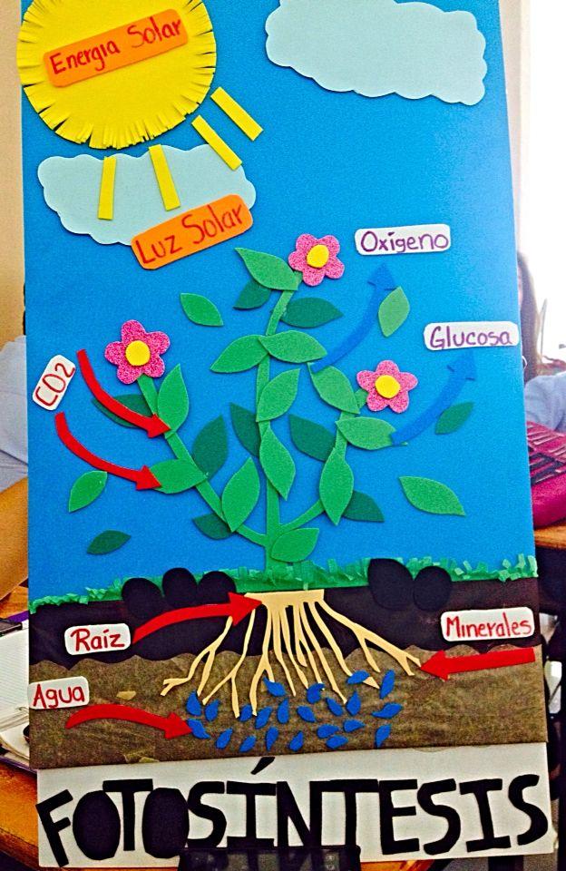 El proceso de la fotosíntesis en una sola imagen