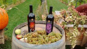 ~Wine Wednesday-Gervasi Experience~