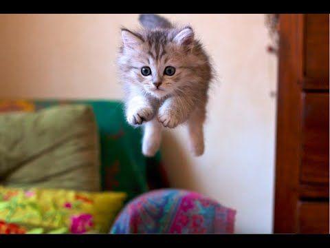 Uçan Kediler video | Kediler Hakkında