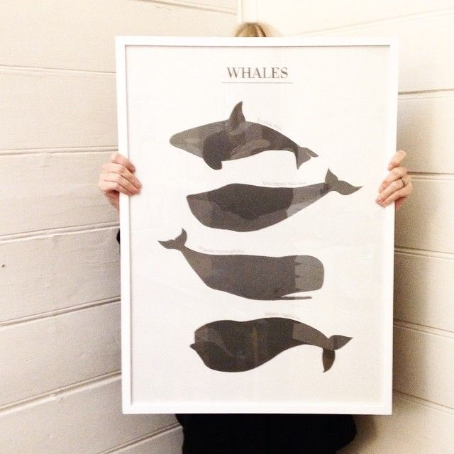 Poster WHALES, 50x70cm. #lagerhaus #2014