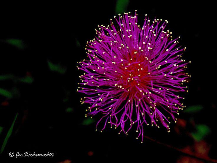 Little flower on my grassland :)