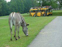 ZOO Dvůr Králové - Safari 2015