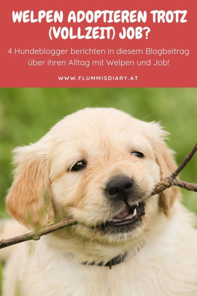 Welpe Trotz Job Erfahrungen Von 4 Hundebloggern Welpen