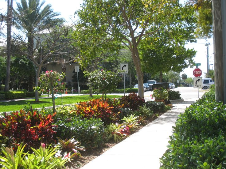 South Florida Landscaping Ideas Pictures Ifas Palm Beach