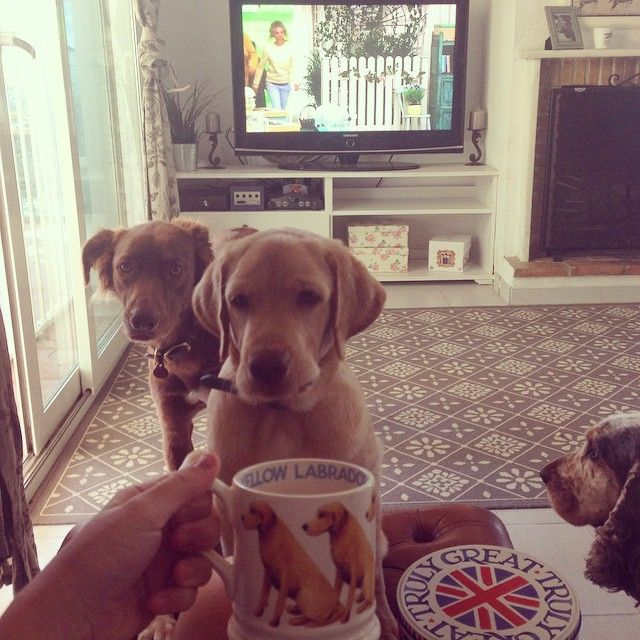 """""""Tea, biscuits, babies and bake off! #labrador #emmabridgewater #GBBO #labradorable"""""""