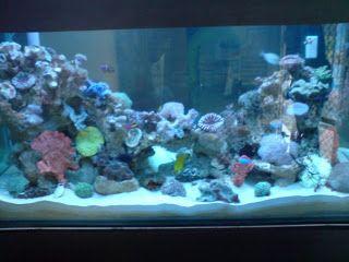 AKUARIUM UNIK: Cara Mudah Memelihara Aquarium ikan Laut