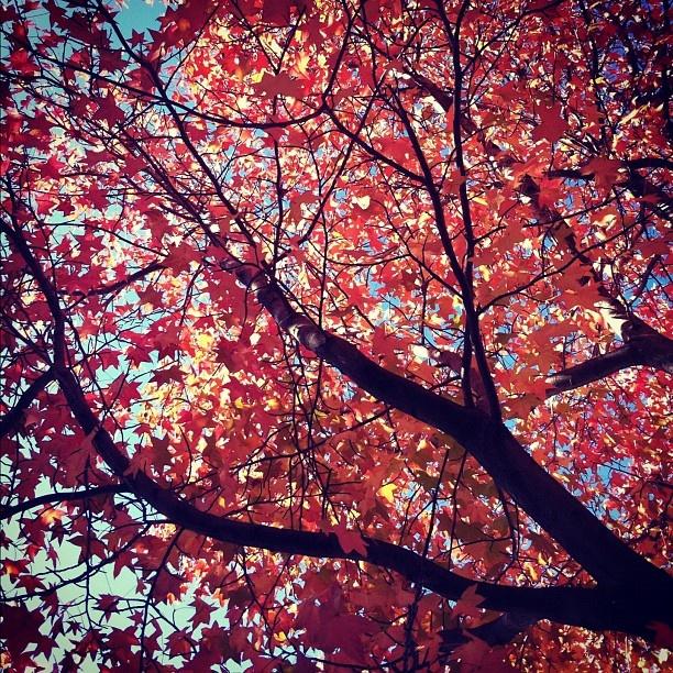 Autumn Foliage