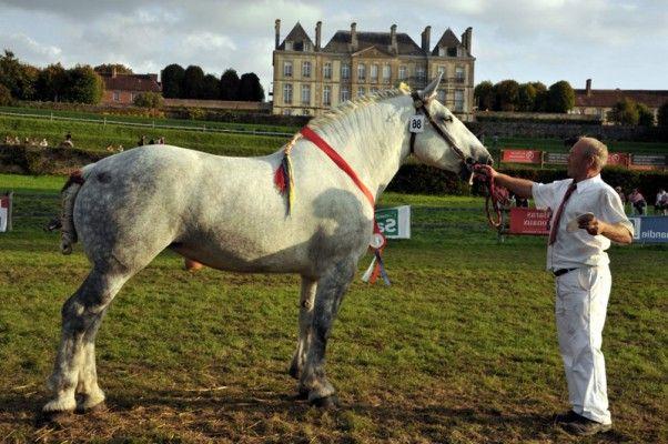Les 25 meilleures id es de la cat gorie chevaux de trait - Tchoupi et le cheval ...