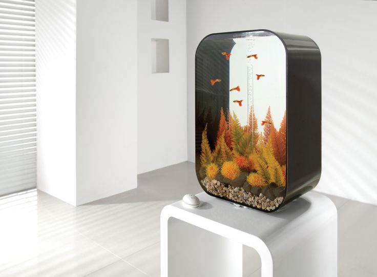 17 best images about aquarium biorb life on pinterest. Black Bedroom Furniture Sets. Home Design Ideas