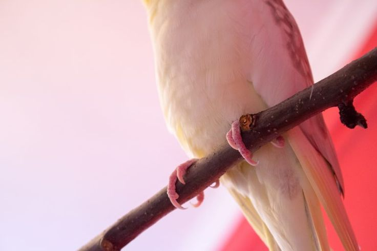 Parrot is on a twig