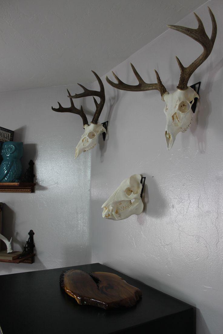 Man Cave Archery : Skull mount euro hanger hunt hunting man
