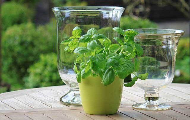 The pleasure of Herbs and the colour Green