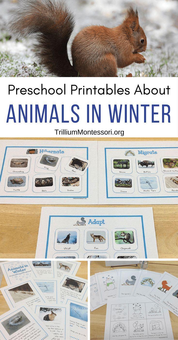 Animals In Winter Unit Trillium Montessori Winter Animals Preschool Winter Animals Kindergarten Winter Activities Preschool [ 1400 x 735 Pixel ]