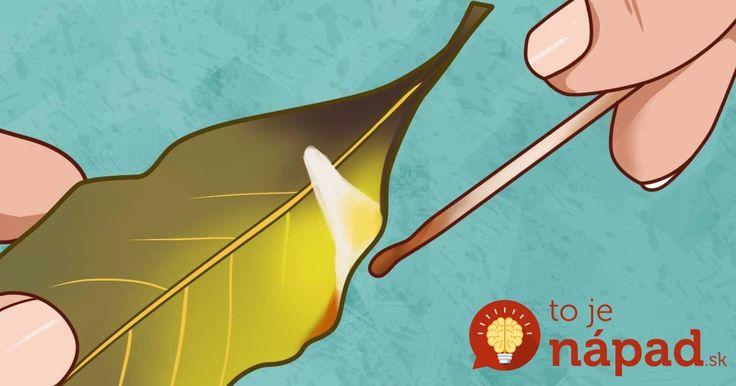 O blahodárnych účinkoch tejto obľúbenej bylinky sa toho popísalo skutočne veľa. Tieto účinky sa však prekvapivo objavia až vtedy, keď bobkový list zapálite.
