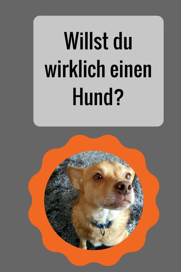 Ein Hund Ist Nicht Immer Nur Niedlich Ein Hund Bedeutet Auch Arbeit Welche Verpflichtungen Mit Der Hundehaltung Verbunden Sind Erf Hunde Hundehaltung Welpen