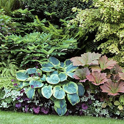 12 great foliage plants for shady areas - go through slide show to find out what will grow where, there are subs suggested