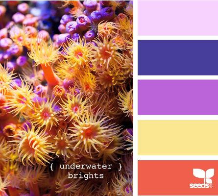 underwater brights palette; like the coral and purple and blue together; front porch makeover