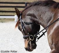 Reasons for Horse Behavior Problems