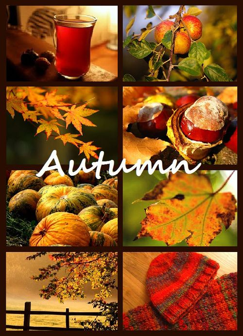 Months In Fall: 100 Best Images About Months, Seasons On Pinterest